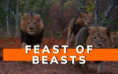 Feast of beasts